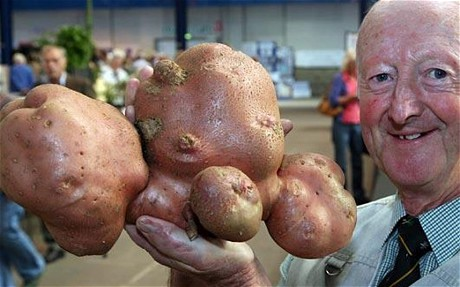 heaviest vegetable in the world