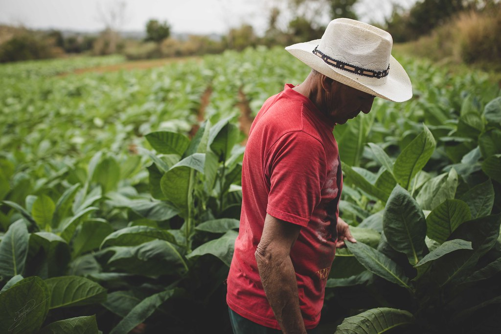 fourth among top 5 largest tobacco producers in the world is United States of America
